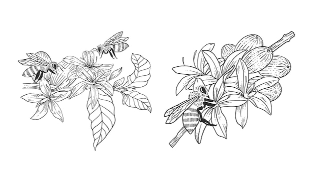 Bee with coffee tree hand drawn illustrations template set