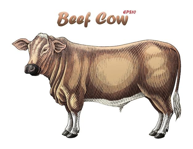 Beef cow in engraivng style