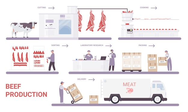 Beef production on meat factory infographic process vector illustration.