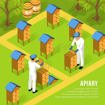 Beekeepers in protective clothing at apiary during work with hives and swarms of bees isometric