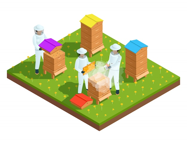 Beekeeping apiary isometric composition with farmers and bee hives vector illustration