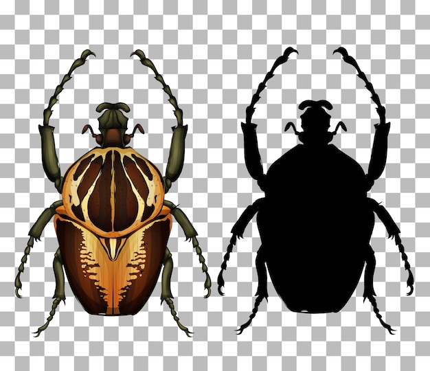 Beetle on transparent background