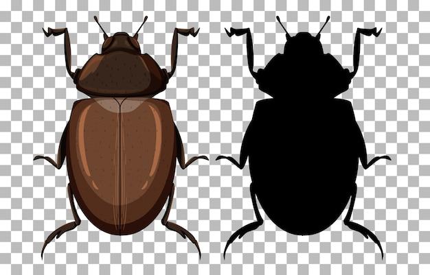 Beetle on transparent background