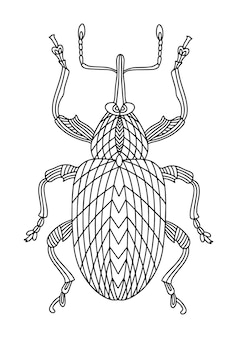 딱정벌레 바구미 색칠하기 책 선형 그림