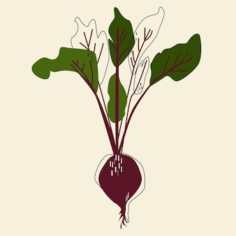 Beetroot abstract vegetable isolated vector illustration. scandinavian style design element.