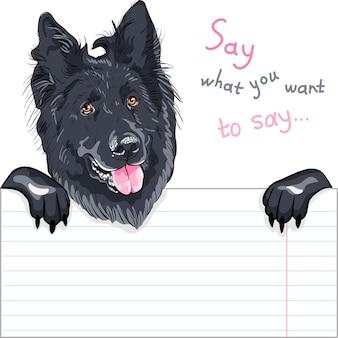 ベルギーの羊飼い犬またはgroenendaelの品種はプラカードを持っています