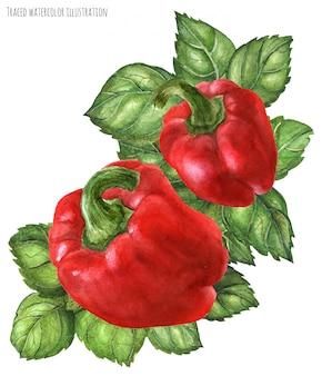Bell pepper and green basil bouquet