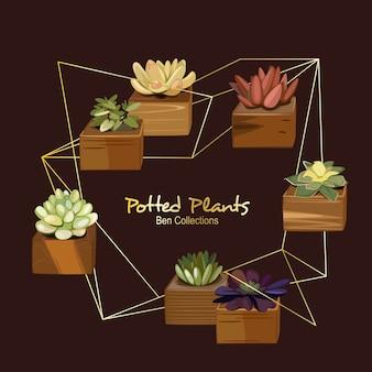 Ben potted plants