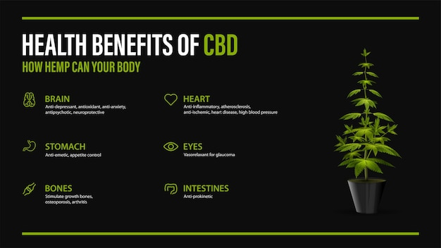 Benefits of cbd for your body, black poster with infographic and bush of cannabis in pot. health benefits of cannabidiol cbd from cannabis, hemp, marijuana, effect on body