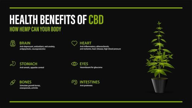 신체에 대한 cbd의 이점, 인포그래픽이 있는 검은색 포스터와 냄비에 대마초 덤불. 대마초, 대마, 마리화나의 cannabidiol cbd가 신체에 미치는 건강상의 이점