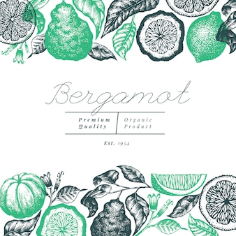 Bergamot branch background design. kaffir lime frame. hand drawn. engraved style retro citrus