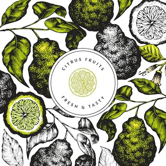 Bergamot branch design template. kaffir lime frame. hand drawn vector fruit illustration. vintage citrus background.