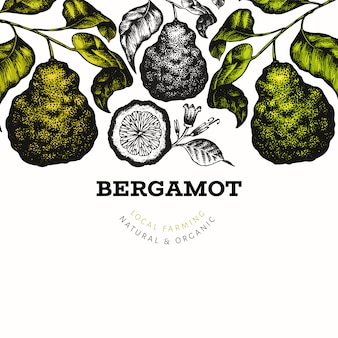 Bergamot branch design template. kaffir lime frame. hand drawn vector fruit illustration