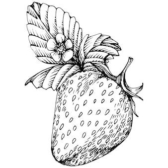 Ягоды ручным рисунком. клубника