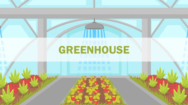 Berries growing in greenhouse vector web banner