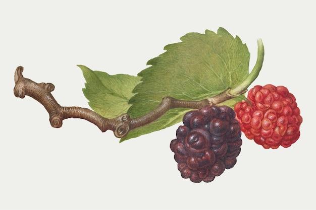 Frutti di bosco su un ramo Vettore gratuito