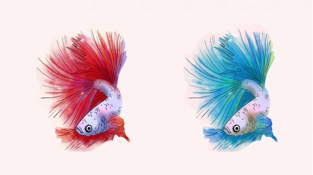 Бета рыбы векторные иллюстрации набор. красивая бетта рыба красного и синего цвета