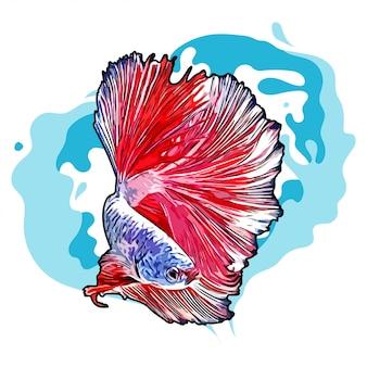Bettaの魚手描きイラスト分離ホワイトバックグラウンド