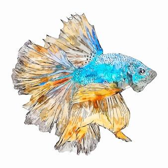 Bettaの魚水彩スケッチ手描きイラスト分離ホワイトバックグラウンド
