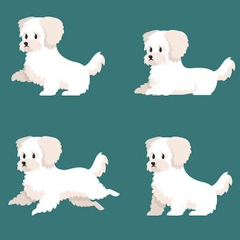 다른 포즈의 bichon bolognese. 만화 스타일의 귀여운 강아지.