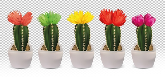 Big collection decorative cactuses in pots. cactuses with colorful flower.
