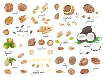孤立した色のナッツと種子の大きなコレクション
