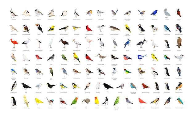Большая коллекция реалистичных векторных птиц.