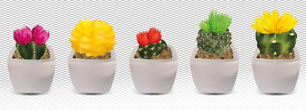 Big collection realistic cactuses in pots. cactuses with colorful flower.
