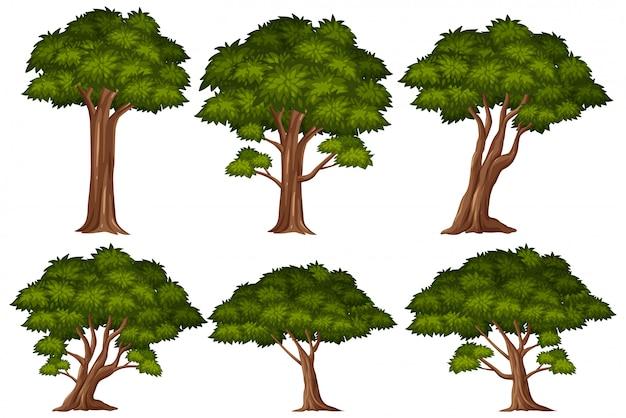 흰색 바탕에 큰 녹색 나무