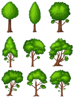 Big green trees on white background