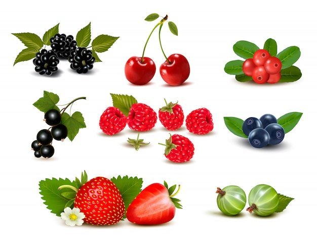 Big group of fresh berries and cherries.  illustration