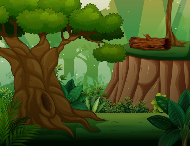 森の真ん中に大きな古い木