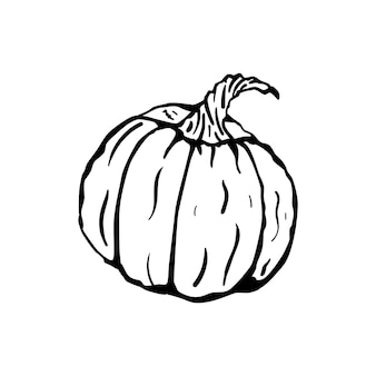 Big ripe pumpkin ink illustration. halloween vector element.