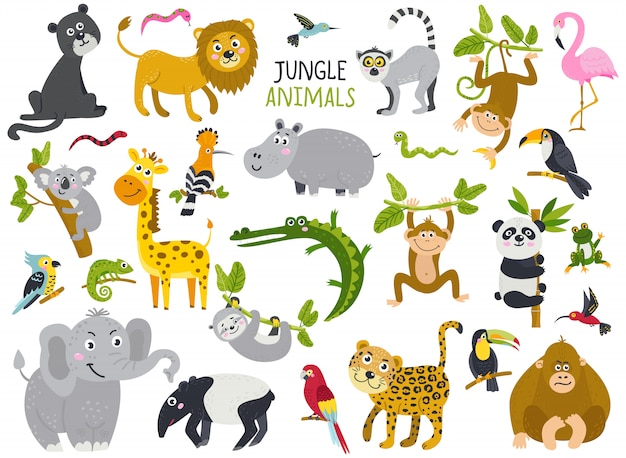 Big set of cute animals from jungle