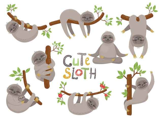 Big set of cute sloths character in various positions