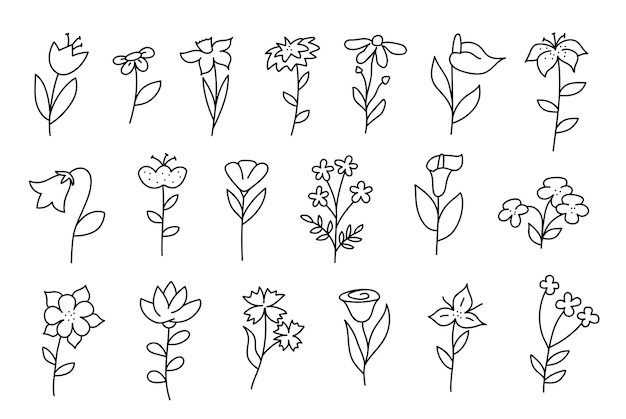 Big set of doodle flowers. tulip, chamomile, lily, cornflower and others. linear hand drawn. vector illustration isolated on white background.