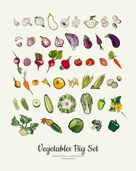 Big set of hipster hand drawn colored vegetables