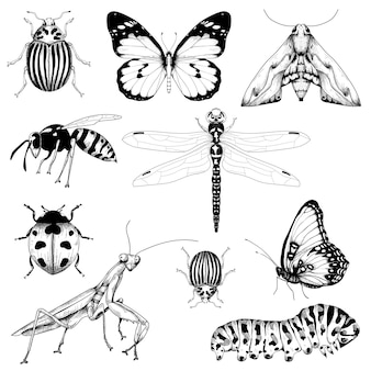 Big set of insects on white