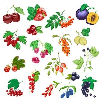 色付きの果実の大きなセット。