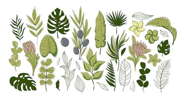 녹색 열 대 잎과 꽃의 큰 집합입니다.