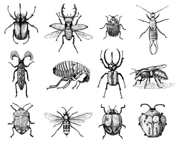 곤충의 큰 세트는 딱정벌레와 꿀벌 빈티지 오래 된 손으로 그린 스타일 새겨진 그림 목판에 많은 종