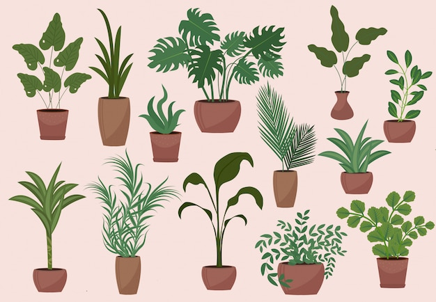 Big set of potted plants modern vintage  style. collection of  elements flowers, palm, ficus, monstera, avocado.  illustration