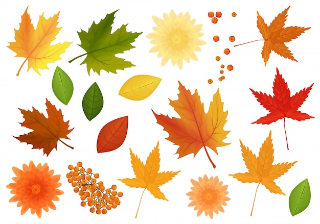 Big set of realistic vector leaves and flowers