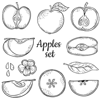 Big set sketch apple. hand drawing. line. set