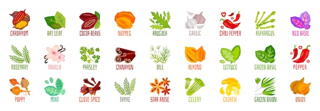 Big set of vegetables nuts herbs spice condiment icons isolated on white
