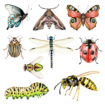 Big set of watercolor insects on white