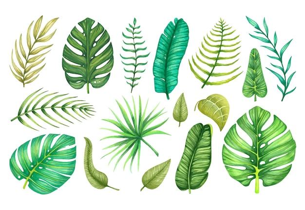 수채화 열대와 이국적인 잎으로 큰 세트