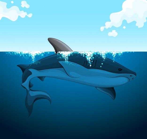 Большая акула плавает под водой
