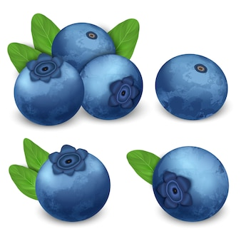 Bilberry icon set, realistic style