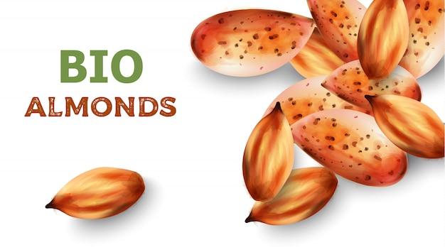 Bio almonds in watercolor style